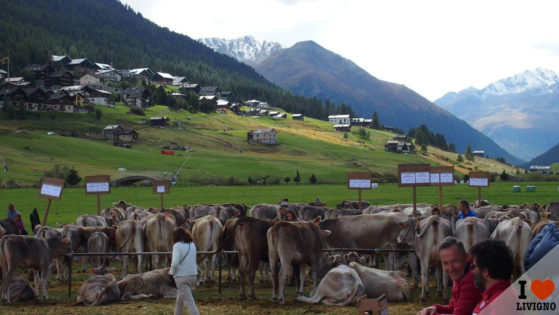 livigno-alpen-fest-2016-2