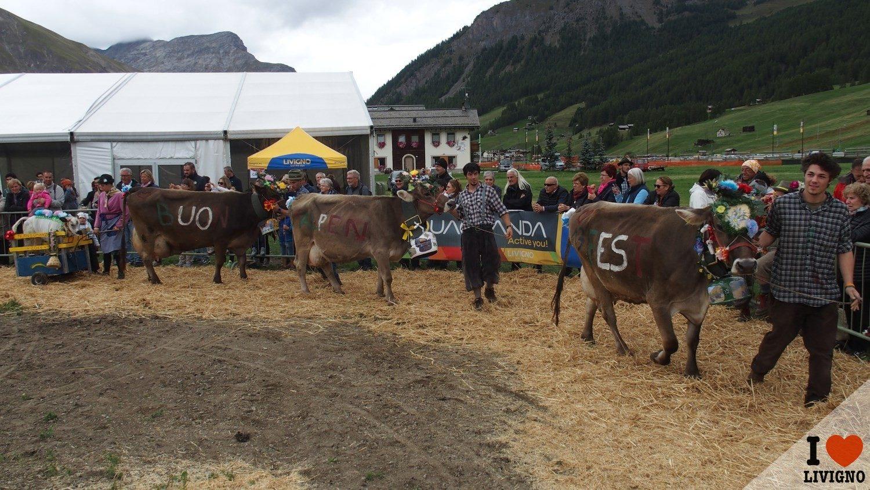 livigno-alpen-fest-2016-4