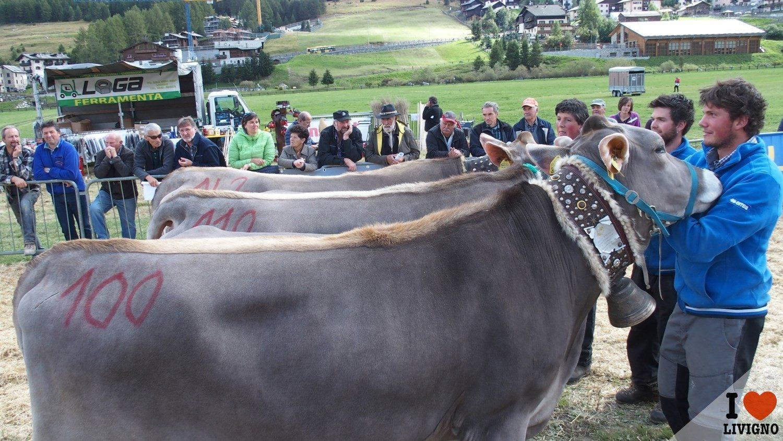 livigno-alpen-fest-2016-8